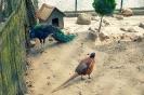 DELI Park PODBITY
